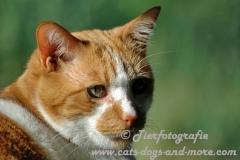 DCAM_Cats_01