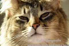 DCAM_Cats_05