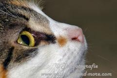 DCAM_Cats_06