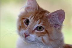 DCAM_Cats_08