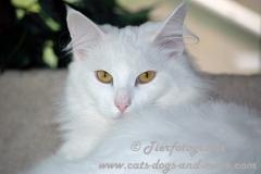 DCAM_Cats_09