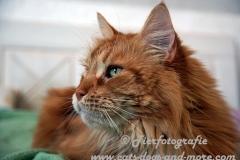 DCAM_Cats_10