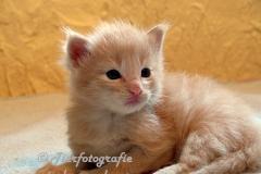 DCAM_Cats_11