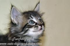 DCAM_Cats_13