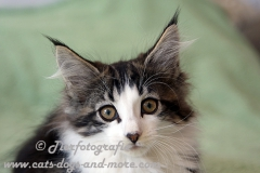 DCAM_Cats_15