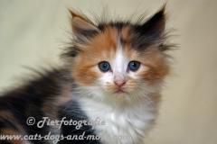 DCAM_Cats_16