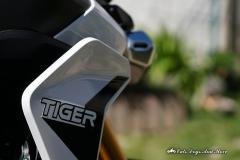 2020_03_26_Tiger_900_o